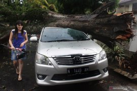 Pemkot Malang antisipasi pohon tumbang saat musim hujan