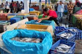 Terkait penemuan bangkai babi, ikan hasil tangkapan di Aceh Timur tetap aman dikonsumsi