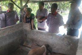 Satu babi diduga Hog Cholera mati di Simalungun, lima tertular