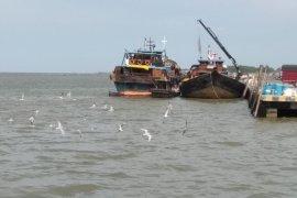 "Burung Camar hiasi ""Water Front City"" di pelabuhan Kualatungkal"