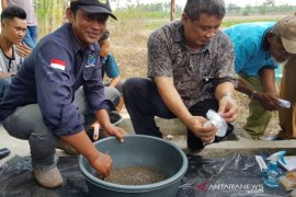 IPB kenalkan budidaya ikan lele gunakan hormon oodev  kepada masyarakat Lampung