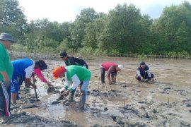 Kepala Desa Jaring Halus tanam 50.000 batang mangrove