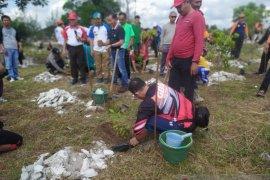 PT Timah-FKPM tanam 1.000 batang pohon pelawan