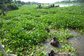Bersihkan sungai dari eceng gondok Page 1 Small