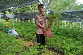 KPH Tabalong prepares free seedlings to support Green Revolution