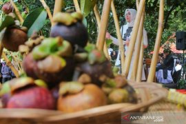 Bupati Purwakarta imbau petani tidak menebang pohon manggis tua