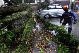 BPBD catat 201 bencana landa Kota Malang selama 2019