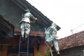 Laporan sarang tawon vespa melalui call center BPBD Kudus capai puluhan
