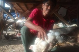 Fenomena aneh dan unik, ada ayam berkaki empat di Agam