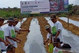 LAJ selenggarakan pelatihan budidaya sayuran di Tebo Jambi