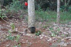 Keterlaluan! Kamera trap pemantau harimau pemangsa sapi di Tapsel dicuri dan dijual Rp500 ribu