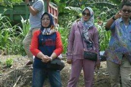 Mentan Syahrul akan beri bantuan 7000 hektare bibit jagung