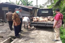 13 ekor bangkai babi di Kelurahan Damarsari dikuburkan