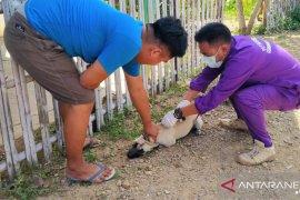 Gorontalo masih miliki cukup stok vaksin anti-rabies