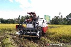 Forkopimkab Abdya panen raya padi