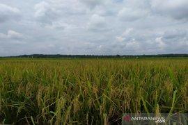 Bulog Sumut tidak pasok beras antarpulau