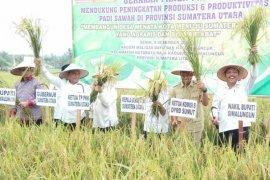 Gubernur Sumut hadiri panen raya tiga komoditas di Simalungun