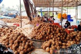 Distan Maluku Tenggara upayakan kelapa dapat entaskan kemiskinan