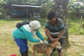 Pemkab Mukomuko akan eliminasi ratusan anjing liar