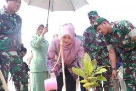 Bupati Pandeglang apresiasi TNI tanam 5.000 bibit pohon ketapang di Desa Cigondang