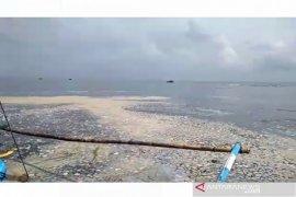 Perairan Pulau Tikus Bengkulu dipenuhi buih putih-kecoklatan