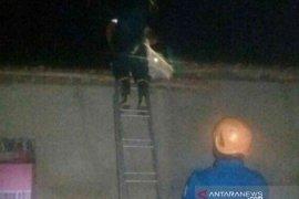 Warga diminta  tidak evakuasi sendiri sarang tawon ndas