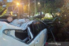 Hujan lebat di Bandung sebabkan pohon tumbang menimpa tiga mobil