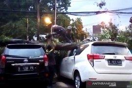 Dinas Pertamanan Kota Bandung diinstruksikan periksa pohon rentan tumbang
