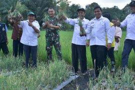 Aceh Tamiang fokuskan pengembangan lumbung bawang merah