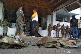 Tuntut keadilan ekologis, 4 bangkai penyu dibawa ke kantor gubernur