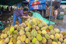 """Banjir"" durian di Pontianak"