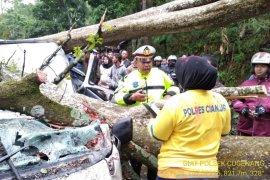 Pohon tumbang timpa minibus di jalur Cipanas-Cianjur
