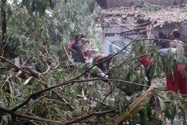 BMKG ingatkan angin kencang di Jatim saat akhir pekan