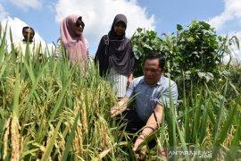 Wali Kota tinjau program pengabdian masyarakat Padangsidimpuan