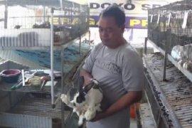 Permintaan daging kelinci meningkat saat libur Natal dan tahun baru
