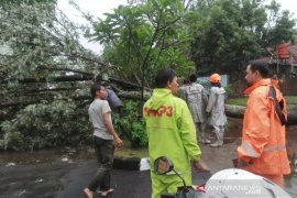 Hujan deras sebabkan banjir dan pohon tumbang di Bandung