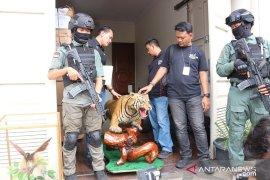 Polisi sita harimau awetan dari rumah pengemudi Lamborghini