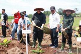 Wagub tanam pisang perdana untuk kawasan hortikultura nasional