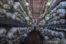 Produksi Baglog jamur tiram