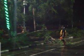 DLH Banjarmasin: banyak pohon tumbang akibat hujan lebat