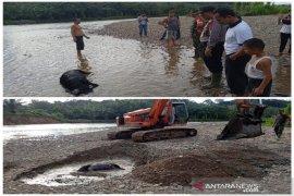 Heboh penemuan bangkai babi, Polres Tapsel imbau warga hindari konsumsi air Sungai Garoga