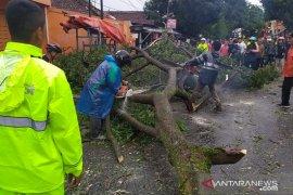 Ada pohon tumbang, jalan raya Sukabumi-Cianjur sempat terputus