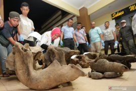 Polisi selidiki penyebab mati lima gajah di Aceh Jaya