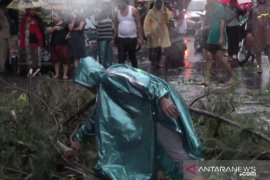 Suami istri tewas tertimpa pohon tumbang di Surabaya (Video)