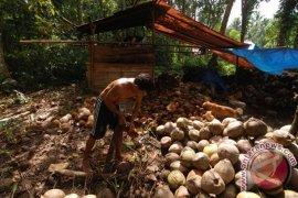 Harga kopra di Kota Ambon turun
