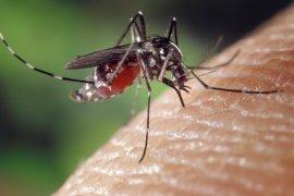 Musim hujan, waspadai penyakit demam dengue
