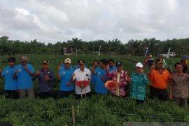 Pemkab Bangka Tengah  dorong petani budidayakan cabai merah