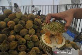 Pengunjung serbu makan durian sepuasnya Page 4 Small