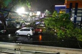 Tiga mobil tertimpa pohon tumbang Kota Bengkulu