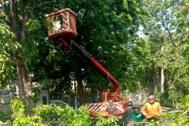Pemangkasan pohon besar-besaran dilakukan di Surabaya akhir pekan ini